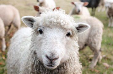 Die Schattenseite von Low Carb – das Leiden der Tiere